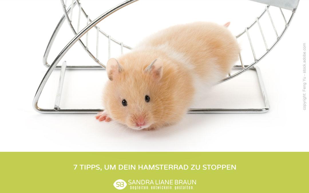 Hamster Hamsterrad aussteigen